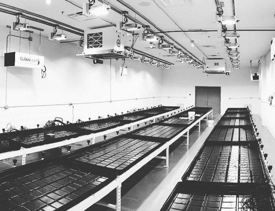 Grow room image: @ri_finest_ showing an empty cannabis grow room ready to be filled with cannabis plants